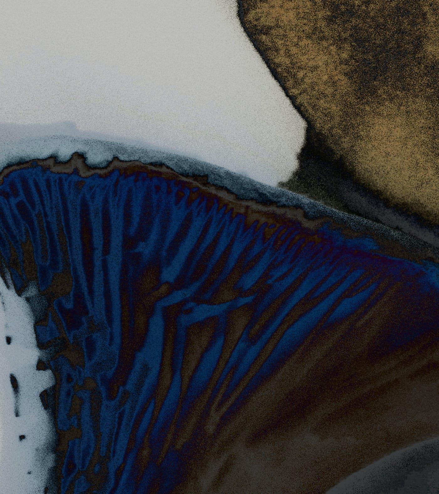 10 Mycela illustration detail
