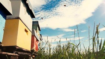 Honningsentralen